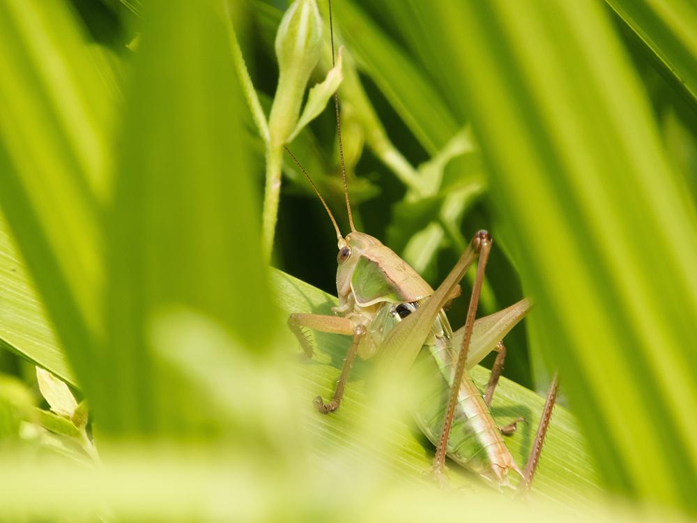 Nikon COOLPIX B700 昆虫