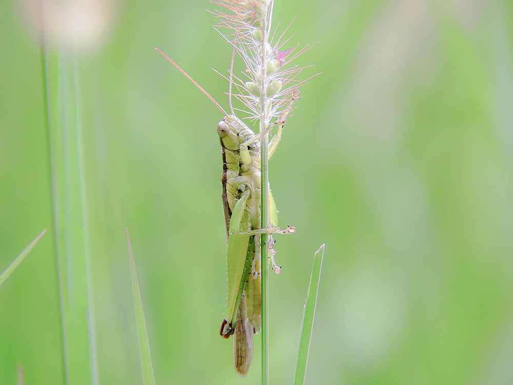 Nikon COOLPIX B700 昆虫撮影